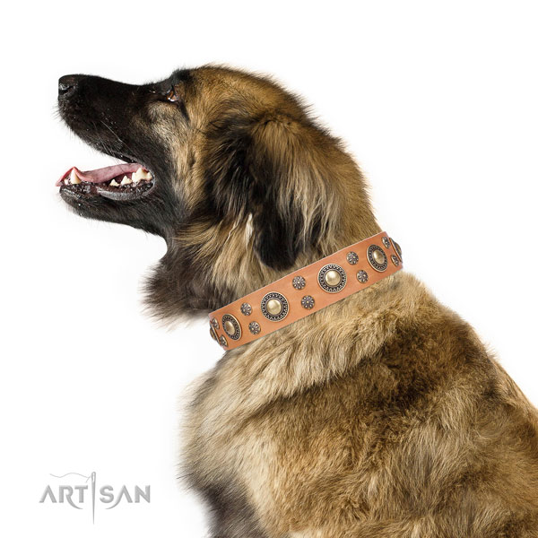 Leonberger leather dog collar for daily use