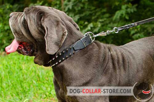 Leather Mastiff Collar With Spikes