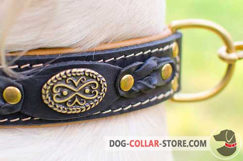 Brass Medallion On Padded Leather Dog Collar