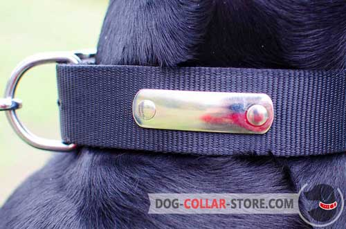 Metal Name Tag on Practical Two Ply Nylon Dog Collar