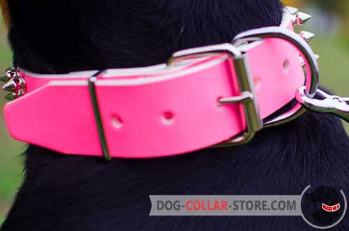 Nickel Plated D-Ring on Leather Dog Collar