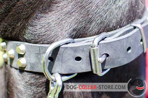 Rust Resistant Nickel Plated D-Ring on Leather Dog Collar