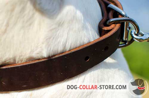 Reliable Nickel-Plated D-Ring on Classic Leather Dog Collar