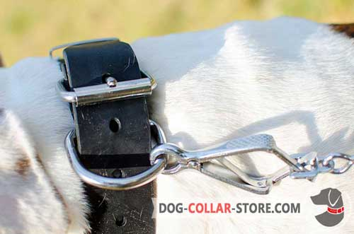 Heavy-Duty Nickel Plated Fittings on Studded Leather Dog Collar