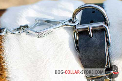Reliable Nickel Plated Fittings on Designer Leather Dog Collar