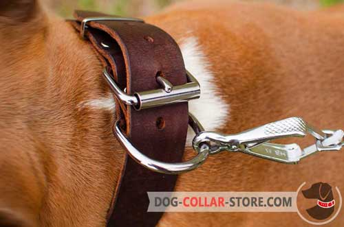 Reliable Nickel Fittings on Wide Leather Dog Collar