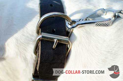 Reliable Nickel Plated Hardware on Fashion Leather Dog Collar