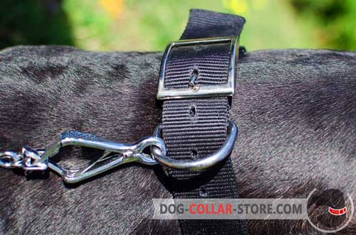 Reliable Nickel Plated Hardware on Studded Nylon Dog Collar