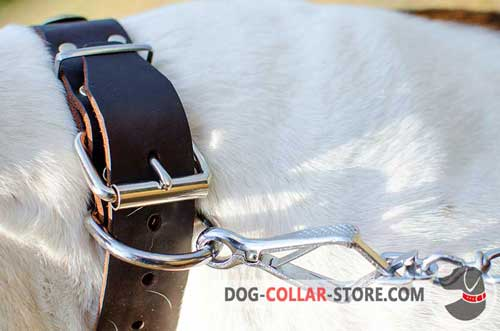 Nickel Plated Hardware on Fashion Plated Leather Dog Collar