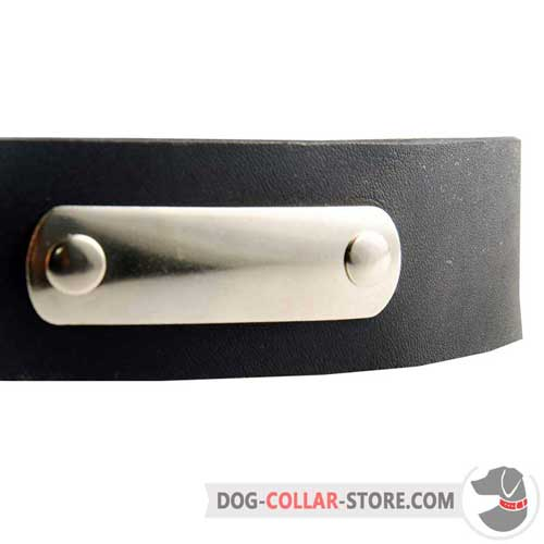 Steel Nickel Plated ID Tag on Functional Leather Dog Collar