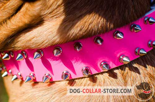 2 Rows of Fashionable Spikes on Dog Collar