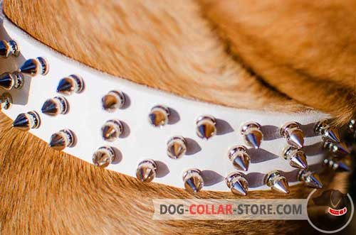 3 Rows of Nickel Plated Spikes on Dog Collar