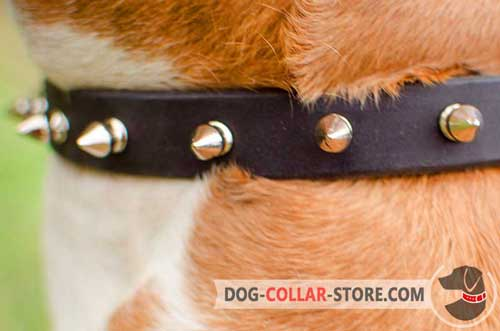 Nickel Decorations on Leather Dog Collar