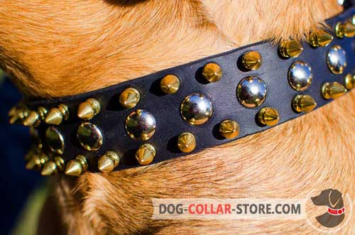 Nickel Plated Studs On Leather Dog Collar