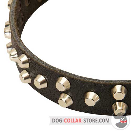 Rust Resistant Nickel Plated Studs on Leather Dog Collar