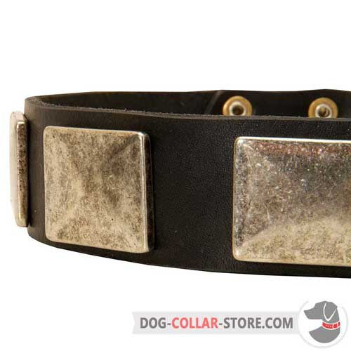 Large Rust Proof Nickel Plates on Designer Leather Dog Collar