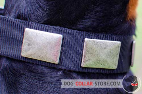 Beautiful Massive Nickel Plates on Nylon Dog Collar