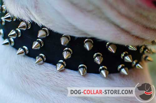 Three Rows of Nickel Plated Spikes on Designer Leather Dog Collar