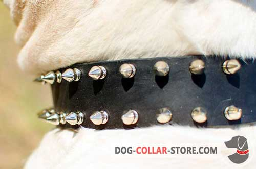 Stylish Nickel Spikes on Leather Dog Collar