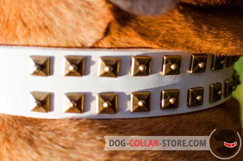 Fashionable Old Nickel Studs on White Leather Dog Collar