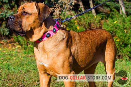 Pink Leather Cane Corso Collar With Stylish Blue Stones