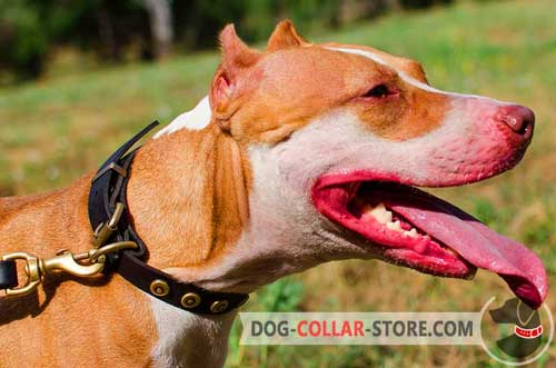 Slim Leather Pitbull Collar With Elegant Circles