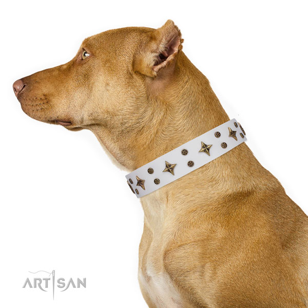 Pitbull full grain leather dog collar for daily walking