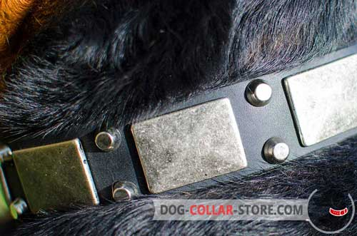 Nickel Plates And Pyramids On Walking Leather Dog Collar
