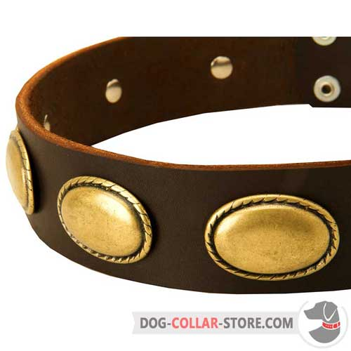 Oval Brass Plates on Vintage Looking Leather Dog Collar