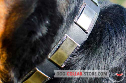 Reliable Nickel Plates on Vintage Leather Dog Collar