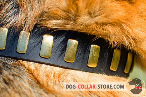Firm Brass Plates On Leather Dog Collar