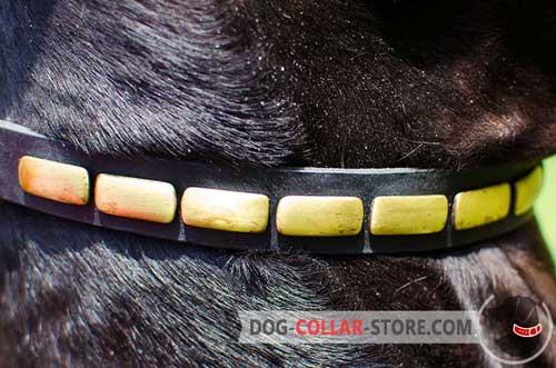 Rust Proof Brass Plates on Ajustable Leather Dog Collar
