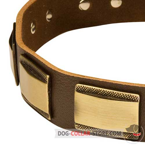 Plates on Leather Dog Collar for Walking