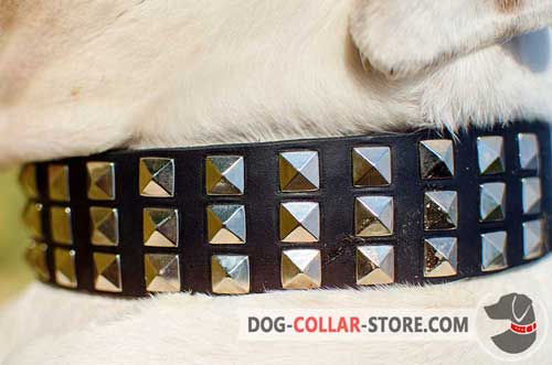 Metal Pyramids on Designer Leather Dog Collar for Walking