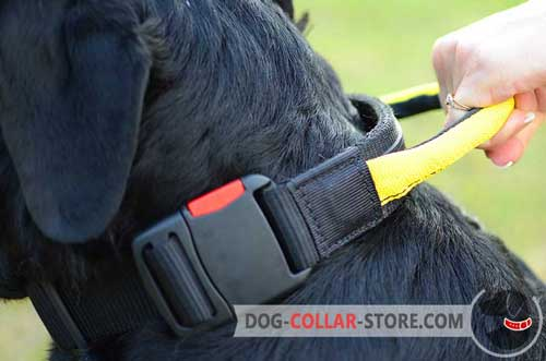 One-Click Buckle on Nylon Dog Collar