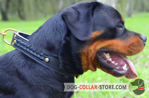 Adjustable Leather Dog Collar for Rottweiler Decorated with Braids