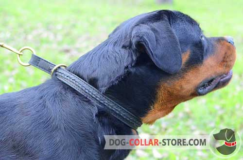 Braided Leather Rottweiler Choke Collar for Daily Walking and Training