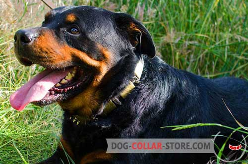 Fashion Leather Rottweiler Collar with Spikes and Plates