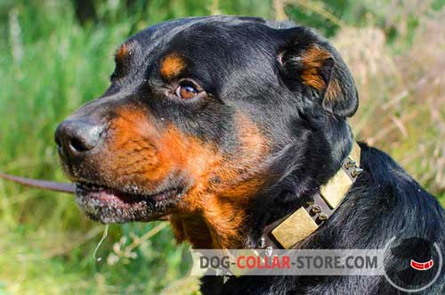 Leather Dog Collar for Rottweiler with Metal Decoration