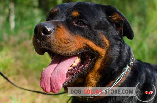 Barbed Wire Painted Leather Dog Collar for Rottweiler