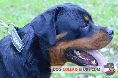 All Weather Nylon Dog Collar for Rottweiler with ID Patches