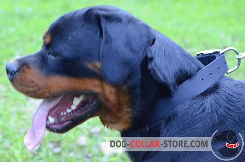Nylon Rottweiler Collar for Daily Walking