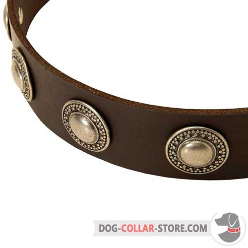 Sophisticated Silver Circles on Designer Leather Dog Collar