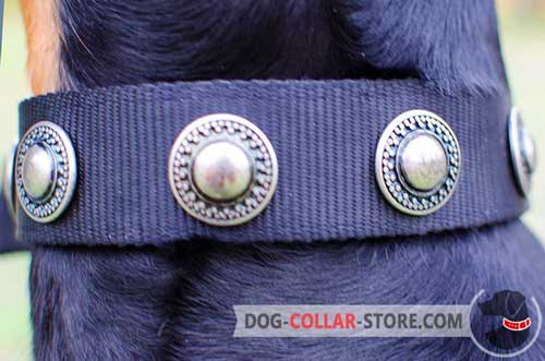 Rustproof Conchos On Nylon Dog Collar