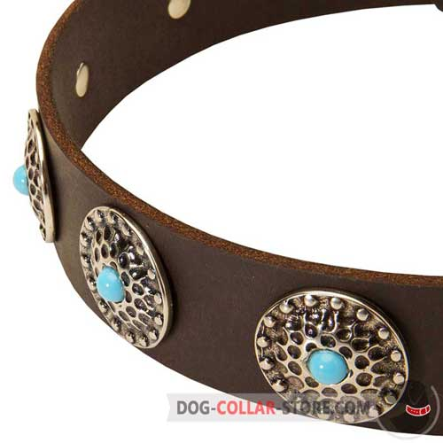 Marvelous Silver Plated Circles on Designer Leather Dog Collar