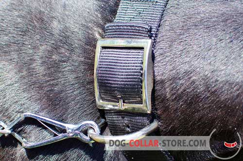 Nickel-Plated D-Ring on Nylon Dog Collar
