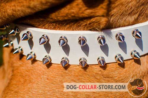 Nickel Plated Spikes On White Leather Dog Collar