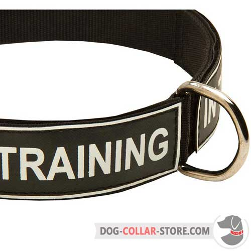 Reliable Nickel-Plated D-Ring on Nylon Dog Collar