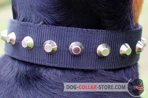 Reliable Studded Decoration on Nylon Dog Collar