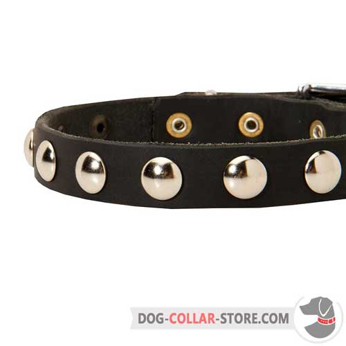 Fashion Nickel Studs on Leather Dog Collar